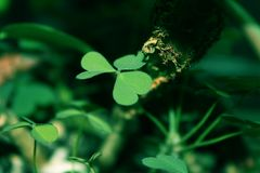 zielony zioła zdjęcia royalty free