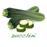 Zielony zucchini wektor ilustracji