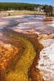 Zielonych alg Runoff obrazy stock