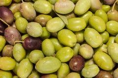 Zielonych oliwek owoc Obraz Royalty Free