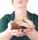 zielonych ręk kiełkowa kobieta Obraz Stock