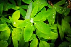 Zielonych rośliien afera deszcz Obraz Stock