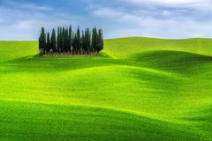 Zielonych wzg?rzy krajobraz Tuscany, W?ochy obraz royalty free