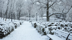 ` ZiemeÄ-¼ blÄ  zma ` Garten Lizenzfreies Stockbild
