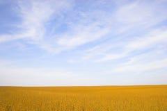 ziemi pól uprawnych Zdjęcia Stock