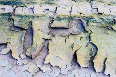 Ziemi pęknięć brudu struktury ziemi abstrakta brudny tło Obraz Royalty Free