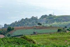 Ziemi uprawnej roślinność na wzgórzach zdjęcia stock
