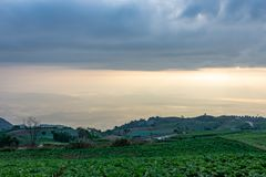 Ziemi uprawnej roślinność na wzgórzach zdjęcie stock