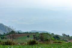 Ziemi uprawnej roślinność na wzgórzach obrazy royalty free