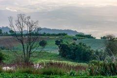 Ziemi uprawnej roślinność na wzgórzach zdjęcie royalty free