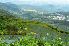 Ziemi uprawnej roślinność na wzgórzach obraz stock