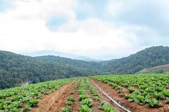 Ziemi uprawnej roślinność na wzgórzach obrazy stock