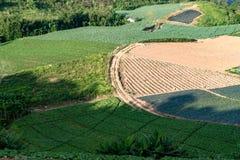 Ziemi uprawnej roślinność na wzgórzach obraz royalty free