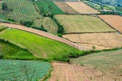 Ziemi uprawnej roślinność na wzgórzach fotografia royalty free
