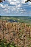 Ziemiaństwo światopogląd, Apache Sitgreaves las państwowy, Arizona, Stany Zjednoczone obrazy royalty free