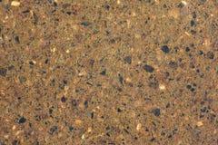 ziemia formica ton Zdjęcia Stock