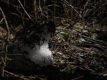 Ziemia i śnieg obrazy stock