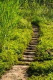 Ziemia kroki Zdjęcie Royalty Free