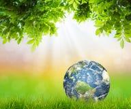 Ziemia na Świeżej wiosny zielonej trawie z zielonym liściem zdjęcia stock