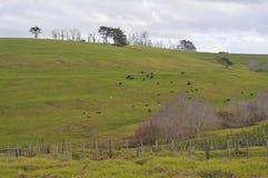Ziemia uprawna na Nowa Zelandia zdjęcia royalty free