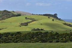 Ziemia uprawna na Północnej wyspie Nowa Zelandia zdjęcie stock