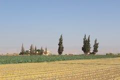 Ziemia uprawna na zewnątrz Jerychońskiego, Palestyna Zdjęcie Stock