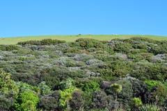 ziemia uprawna nowy panoramiczny szeroki Zealand zdjęcia royalty free