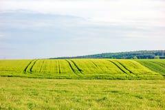Ziemia uprawna - pszeniczny pole Zdjęcie Royalty Free