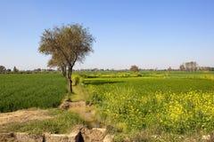 Ziemia uprawna w Rajasthan Fotografia Royalty Free
