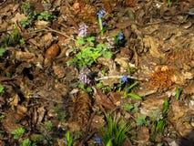 Ziemia w jedlinowym lesie Fotografia Stock