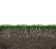 Ziemia z korzeniami ilustracja wektor