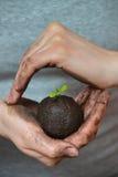 Ziemia z małym obsiewaniem w kobiet rękach w formie ziemska planeta, ekologii pojęcie Fotografia Royalty Free