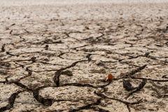 Ziemia z suchym Zdjęcie Royalty Free