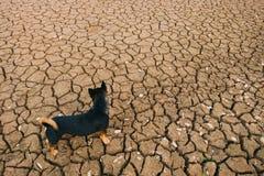 Ziemia z suchym Obraz Stock
