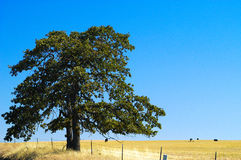 Ziemie uprawne, Goldendale, WA Zdjęcia Royalty Free