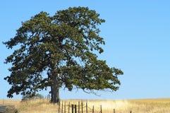 Ziemie uprawne, Goldendale, WA Zdjęcia Stock