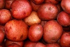 ziemniaki. Zdjęcia Stock