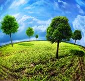 ziemscy drzewa Obraz Royalty Free