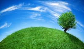 ziemska zieleń Zdjęcie Royalty Free