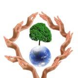 ziemski błękit treee Zdjęcie Royalty Free