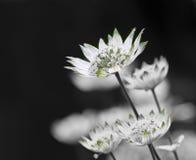 Zierliche Blüten stockfotografie