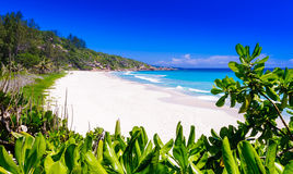 Zierlicher anse Strand auf der Insel von La digue in den Seychellen Stockbilder