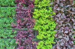 Zierpflanze Lizenzfreies Stockfoto