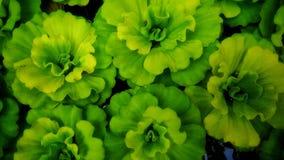 Zierpflanzen Stockfoto