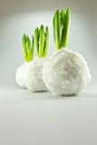 Zierpflanzen Lizenzfreies Stockfoto