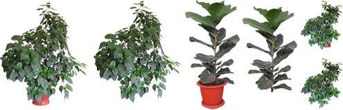 Zierpflanzen Lizenzfreies Stockbild