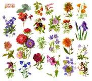 Zierpflanzen Stockbilder