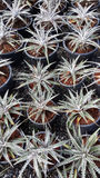 Zierpflanzen Lizenzfreie Stockbilder
