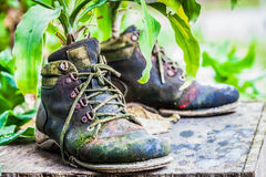Zierpflanzen auf alten Schuhen Stockbild