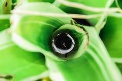 Zierpflanzen ist bunt Stockbilder